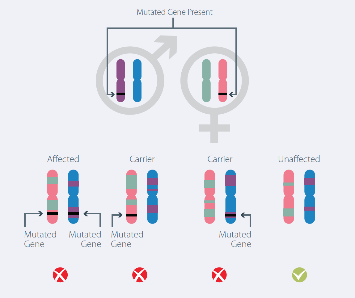 What Is Mutant Gene Identification And Can Pgd Help Bridge Clinic