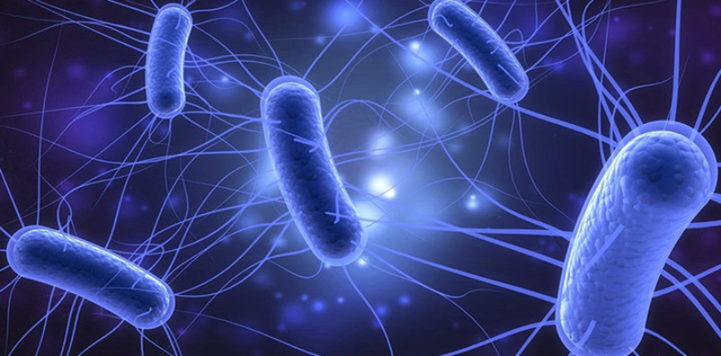 What You Need to Know About E. Coli