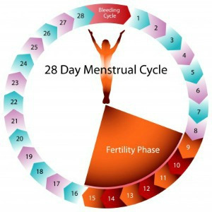 6 Things You Should Know About Ovulation